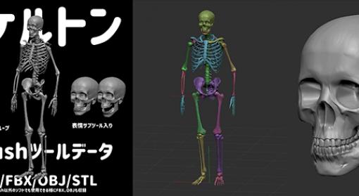 スケルトン ZBrush向け3Dモデル - 竹の子Lab.による人体骨格3Dモデル!無料配布中!改変・商用OK!ZTL/FBX/OBJ/STL