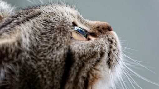 第33話  猫カフェの禁止事項・・・! - 萬策大好き。ほんとだよ!「四コマ漫画」