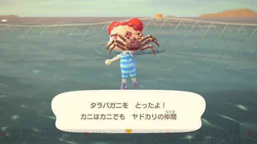 11月に捕っておきたいサカナと海の幸はコレだ!【あつ森日記#156】