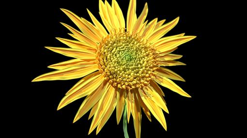 "WORK 026 ""Sunflower"" / プロシージャルで作成するヒマワリの種と配列 - 連載"